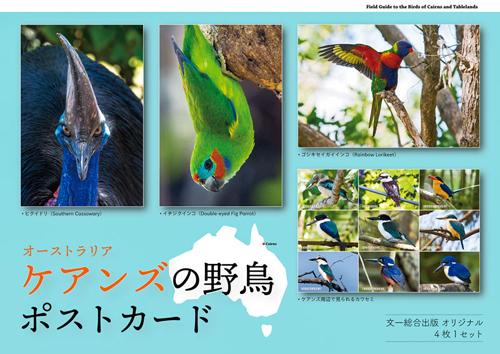 ケアンズポストカード.jpg