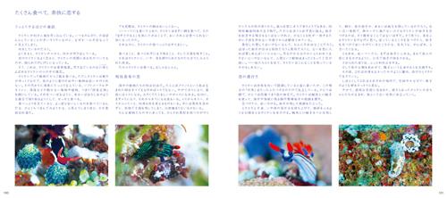 7915-0_100-101L.jpg