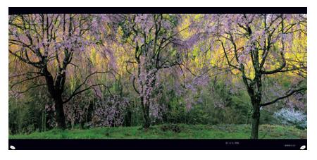 桜模様1.png