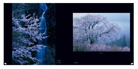 桜模様2.png