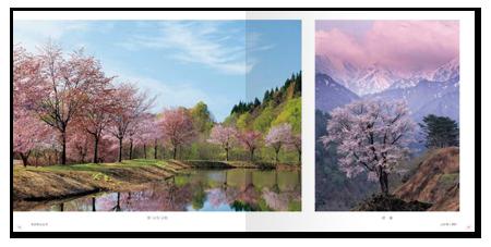 桜模様3.png