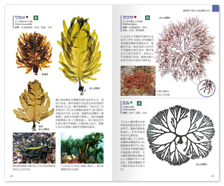 海藻1.png