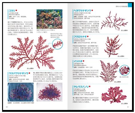 海藻2.png
