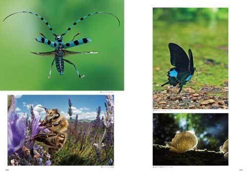 自然写真の教科書2_1.jpg