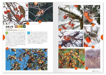野鳥と木の実2.png