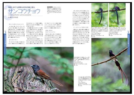 野鳥撮影1.png