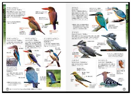 鳥くん1.png