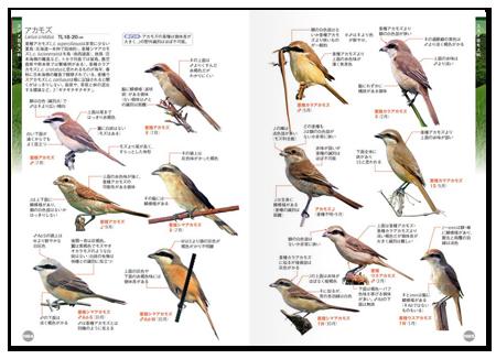 鳥くん2.png