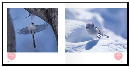 鳥日和1.png