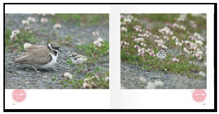 鳥日和2.png